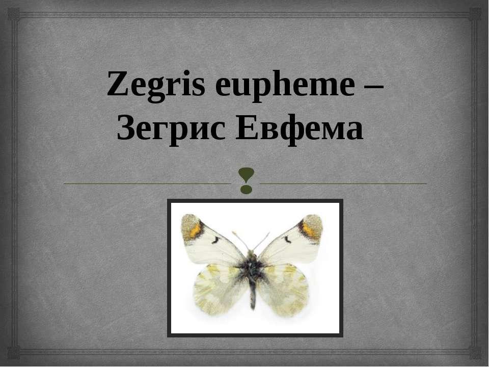 Zegris eupheme – Зегрис Евфема