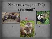 Хто з цих тварин Тхір степовий? 1 3 2
