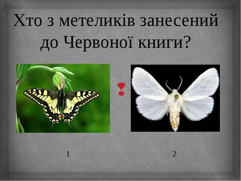Хто з метеликів занесений до Червоної книги? 1 2