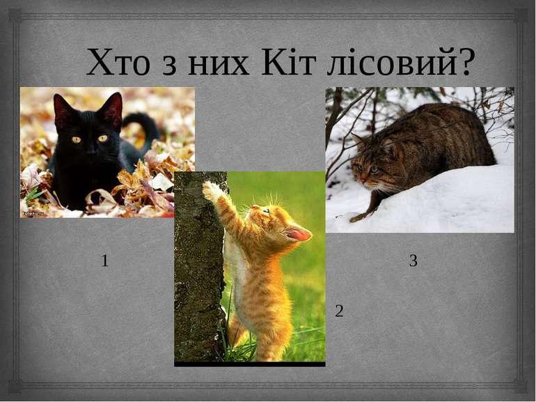 Хто з них Кіт лісовий? 1 3 2