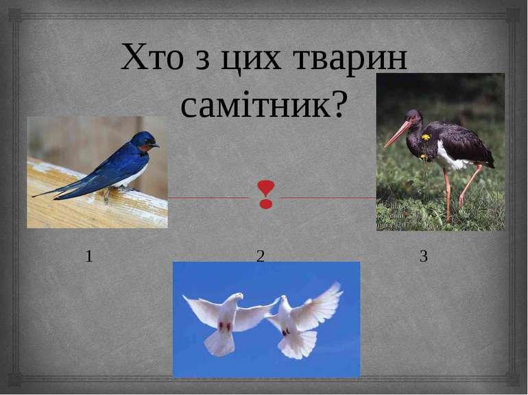 Хто з цих тварин самітник? 1 2 3