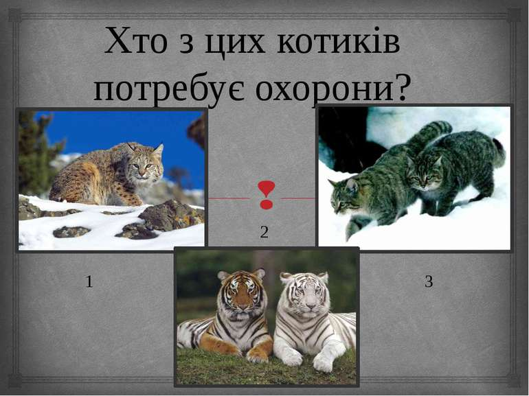 Хто з цих котиків потребує охорони? 2 1 3