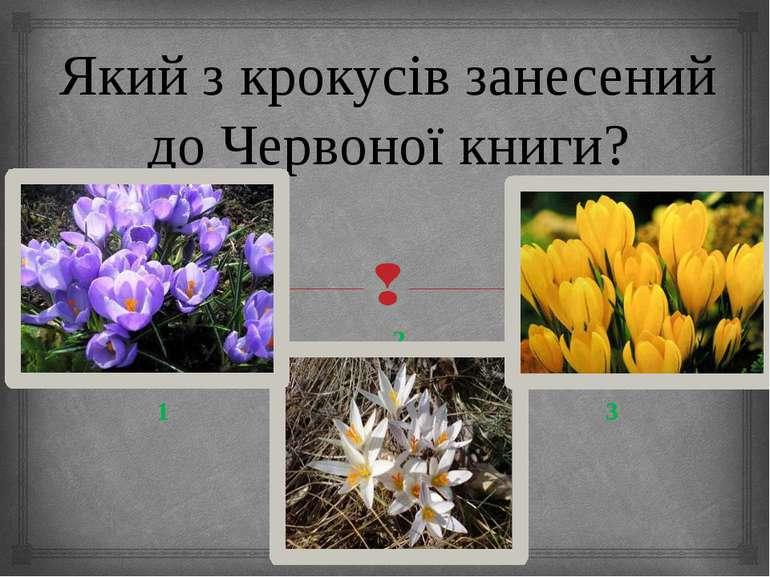 Який з крокусів занесений до Червоної книги? 2 1 3