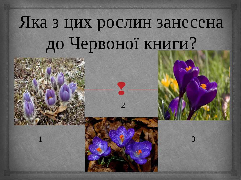 Яка з цих рослин занесена до Червоної книги? 2 1 3