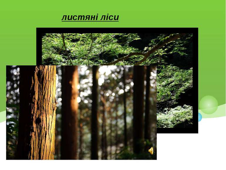 листяні ліси