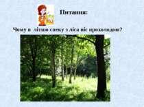 Чому в літню спеку з ліса віє прохолодою?