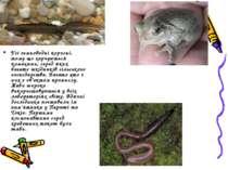 Усі земноводні корисні, тому що харчуються комахами, серед яких багато шкідни...