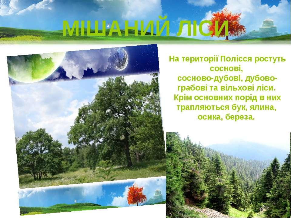 МІШАНИЙ ЛІСИ На території Полісся ростуть соснові, сосново-дубові, дубово-гра...