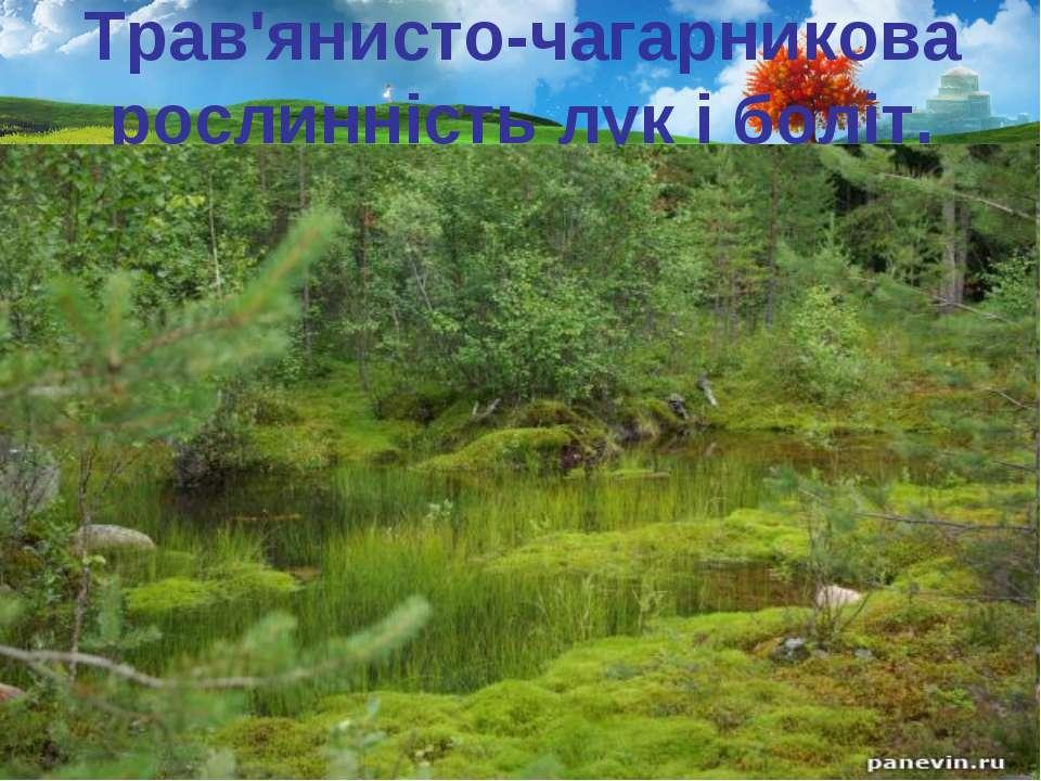 Трав'янисто-чагарникова рослинність лук і боліт.