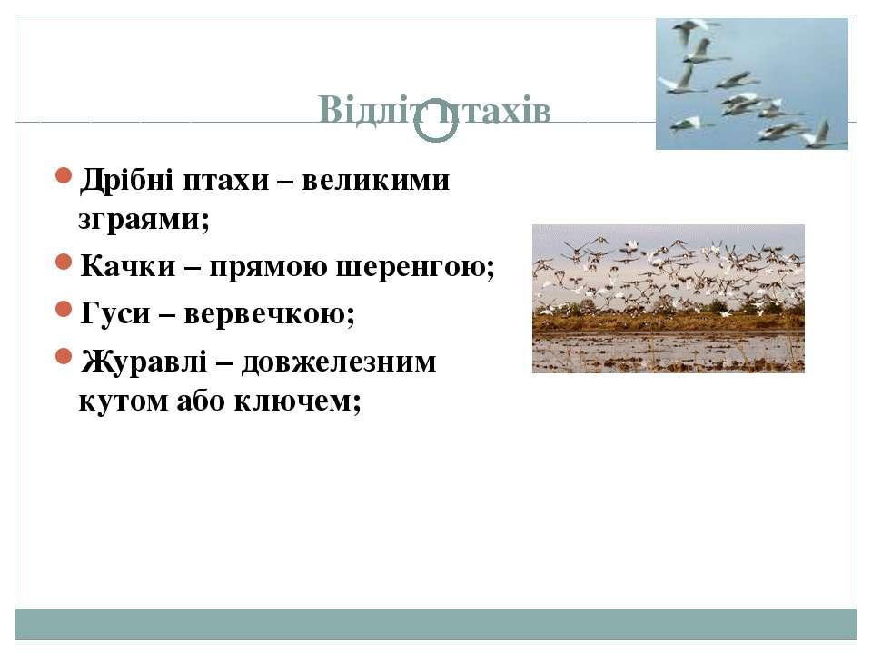 Відліт птахів Дрібні птахи – великими зграями; Качки – прямою шеренгою; Гуси ...