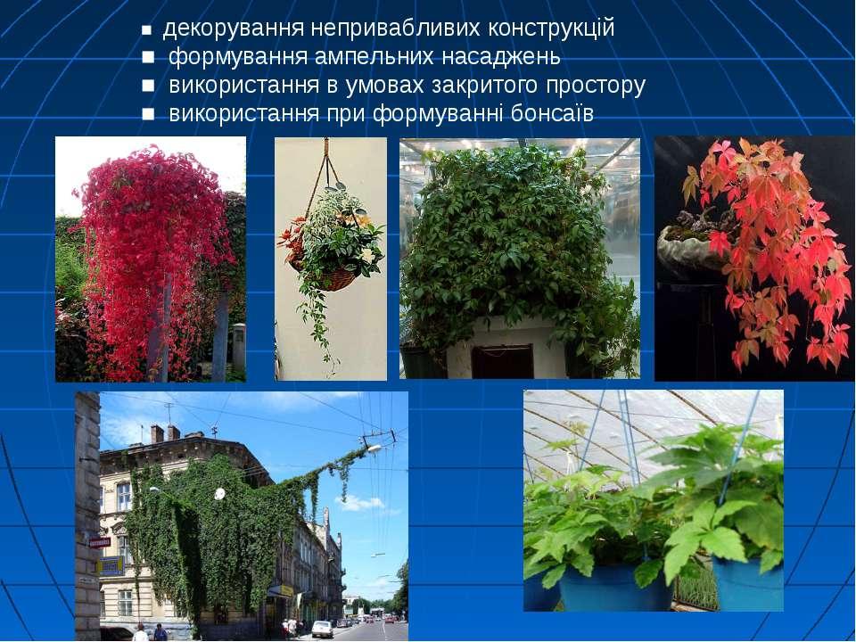 ■ декорування непривабливих конструкцій ■ формування ампельних насаджень ■ ви...
