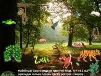 Найбільш багаті видами тропічні ліси. Тут на 1 м2 припадає кілька сотень тися...