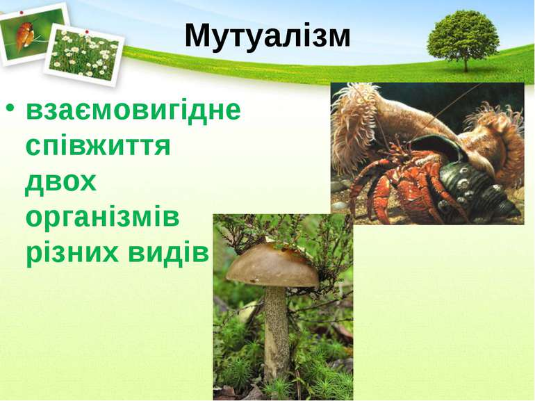 Мутуалізм взаємовигідне співжиття двох організмів різних видів