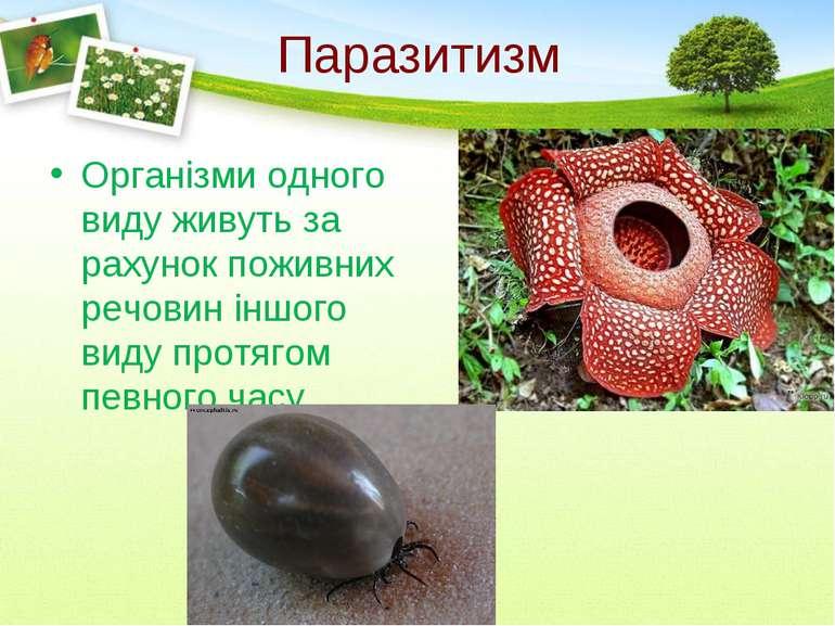 Паразитизм Організми одного виду живуть за рахунок поживних речовин іншого ви...