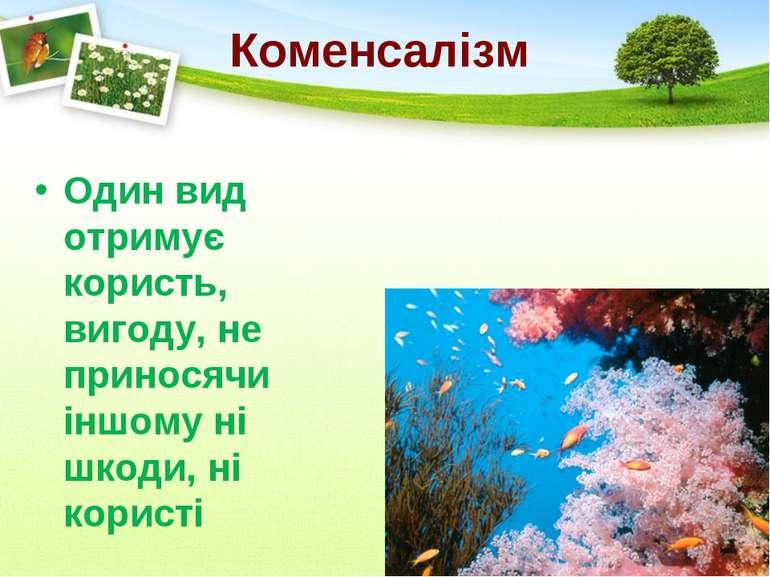 Коменсалізм Один вид отримує користь, вигоду, не приносячи іншому ні шкоди, н...