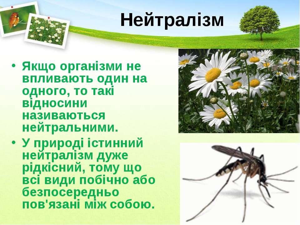 Нейтралізм Якщо організми не впливають один на одного, то такі відносини нази...