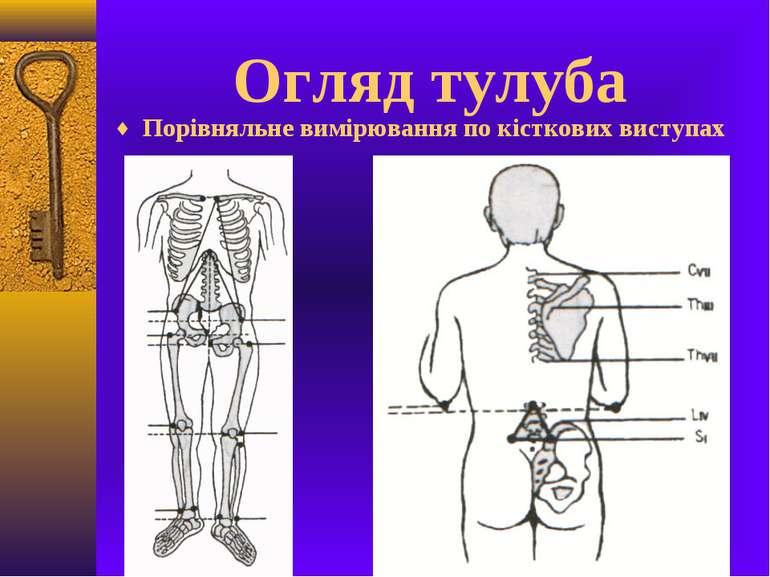 Огляд тулуба Порівняльне вимірювання по кісткових виступах