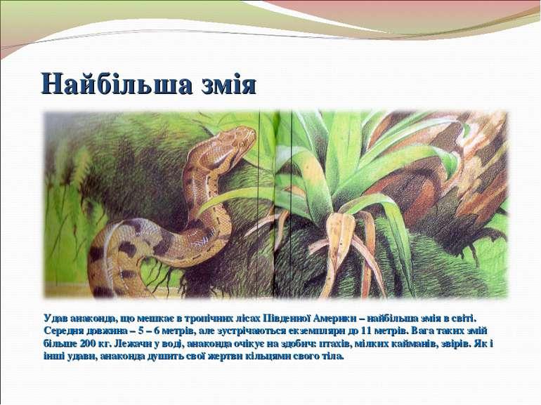 Найбільша змія Удав анаконда, що мешкає в тропічних лісах Південної Америки –...
