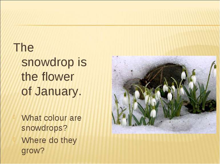 The snowdrop is the flower of January. What colour are snowdrops? Where do th...