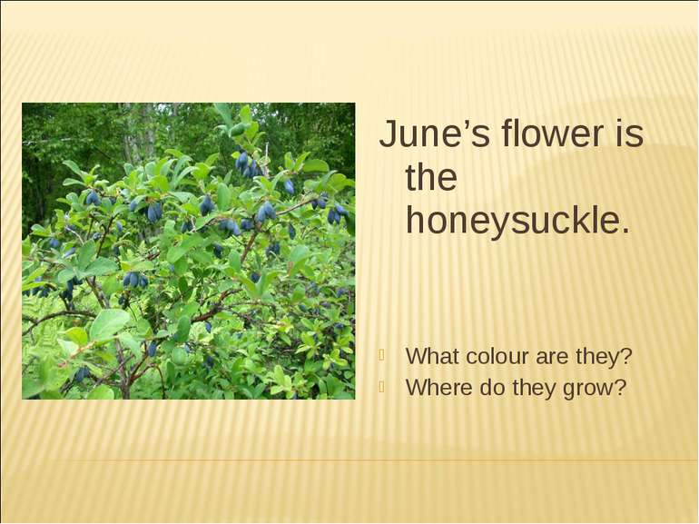 June's flower is the honeysuckle. What colour are they? Where do they grow?