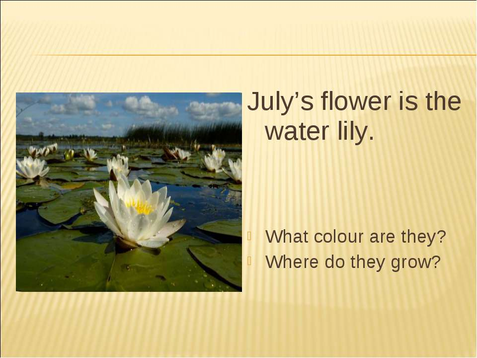July's flower is the water lily. What colour are they? Where do they grow?