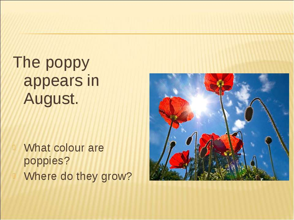 The poppy appears in August. What colour are poppies? Where do they grow?