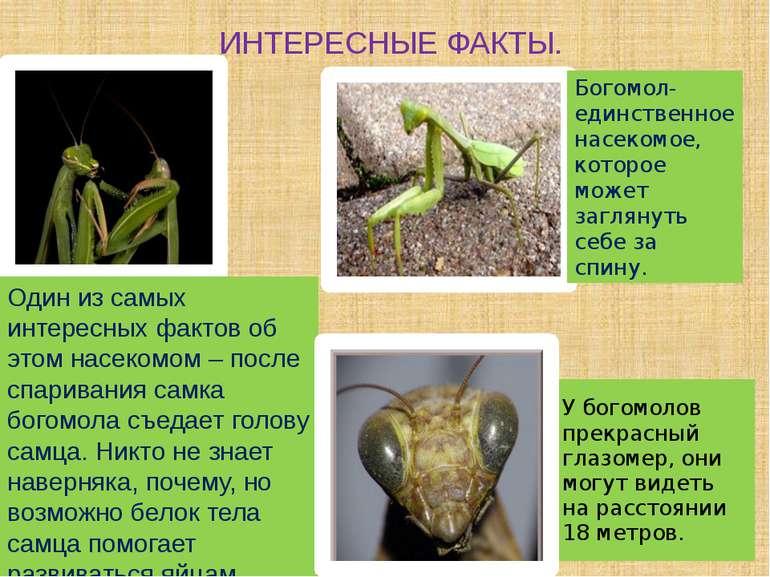 ИНТЕРЕСНЫЕ ФАКТЫ. Один из самых интересных фактов об этом насекомом – после с...