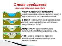 Смена сообществ при зарастании водоёма Начало зарастания водоёма: недостаток ...