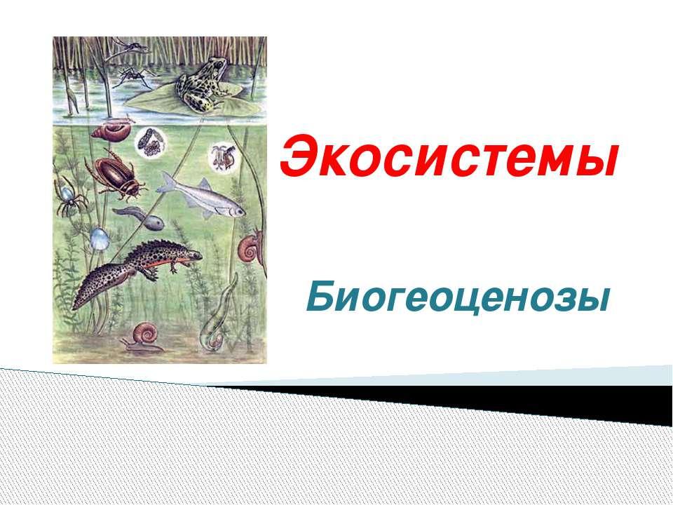 Экосистемы Биогеоценозы