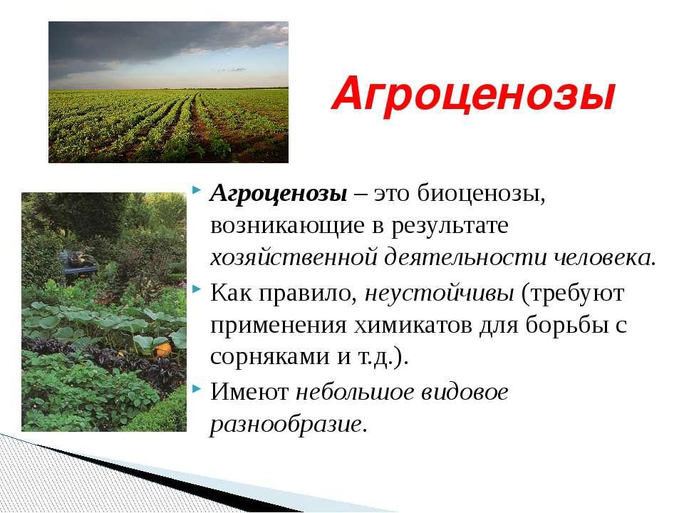 Агроценозы Агроценозы – это биоценозы, возникающие в результате хозяйственной...