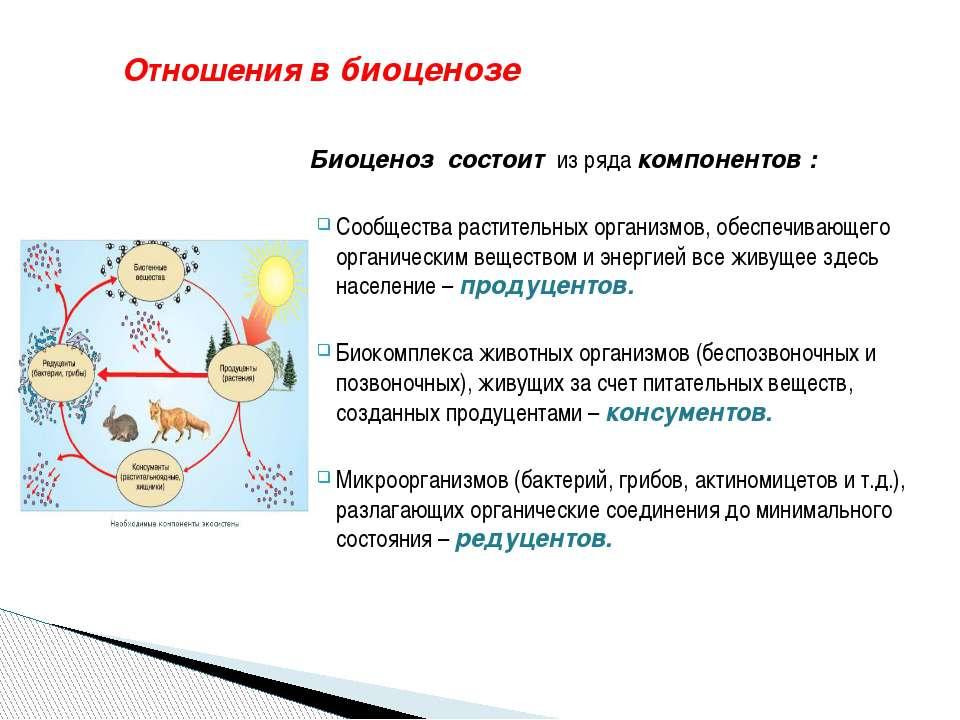 Отношения в биоценозе Биоценоз состоит из ряда компонентов : Сообщества расти...
