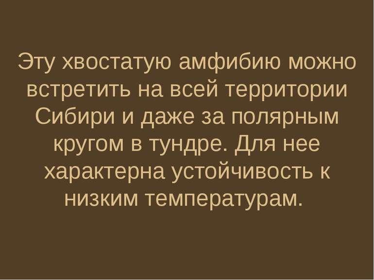 Эту хвостатую амфибию можно встретить на всей территории Сибири и даже за пол...