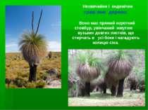 Незвичайне і ендемічне трав׳яне дерево. Воно має прямий короткий стовбур, уві...