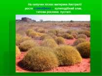 На сипучих пісках материка Австралії росте спиніфекс – кулеподібний злак, тип...