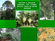 Рослини в Австралії унікальні - 75% їх видів ростуть тільки на цьому материку