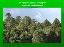 На гірських схилах поширені реліктові хвойні дерева - араукарії