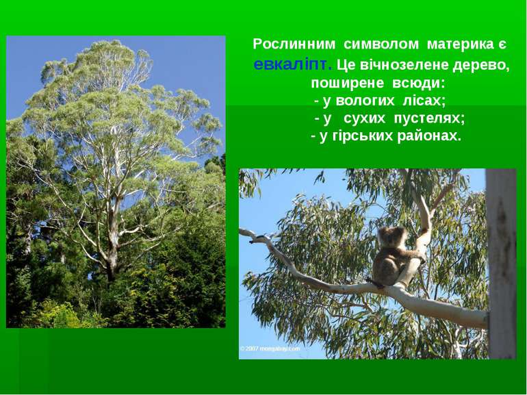 Рослинним символом материка є евкаліпт. Це вічнозелене дерево, поширене всюди...