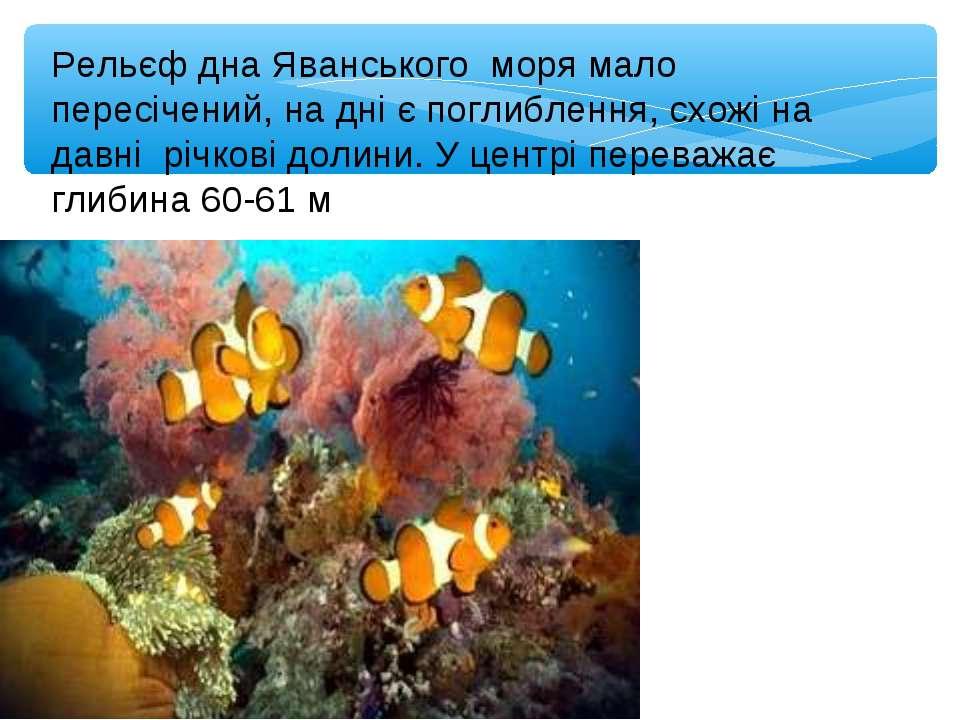 Рельєф дна Яванського моря мало пересічений, на дні є поглиблення, схожі на д...