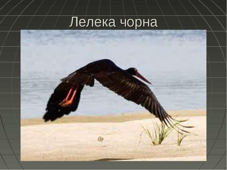 Лелека чорна