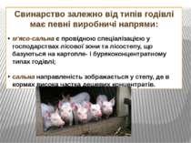 Свинарство залежно від типів годівлі має певні виробничі напрями: м'ясо-сальн...