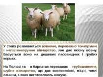 У степу розвивається вовняне, переважно тонкорунне і напівтонкорунне вівчарст...