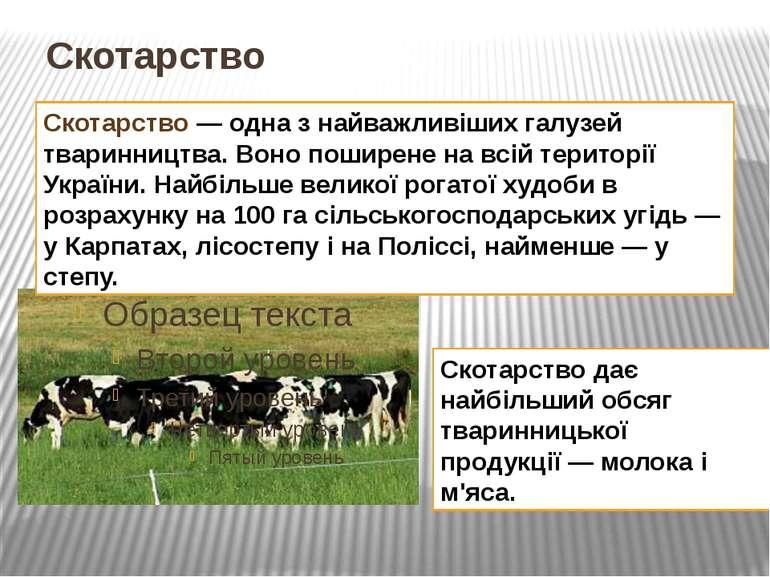 Скотарство Скотарство— одна з найважливіших галузей тваринництва. Воно пошир...