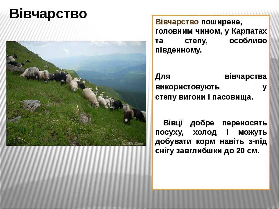 Вівчарствопоширене, головним чином, у Карпатах та степу, особливо південному...