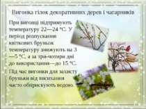 Вигонка гілок декоративних дерев і чагарників При вигонці підтримують темпера...