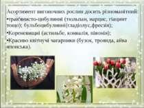 Асортимент вигоночних рослин досить різноманітний: трав'янисто-цибулинні (тюл...