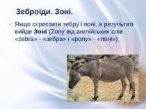 Якщо схрестити зебру і поні, в результаті вийде Зоні (Zony від англійських сл...