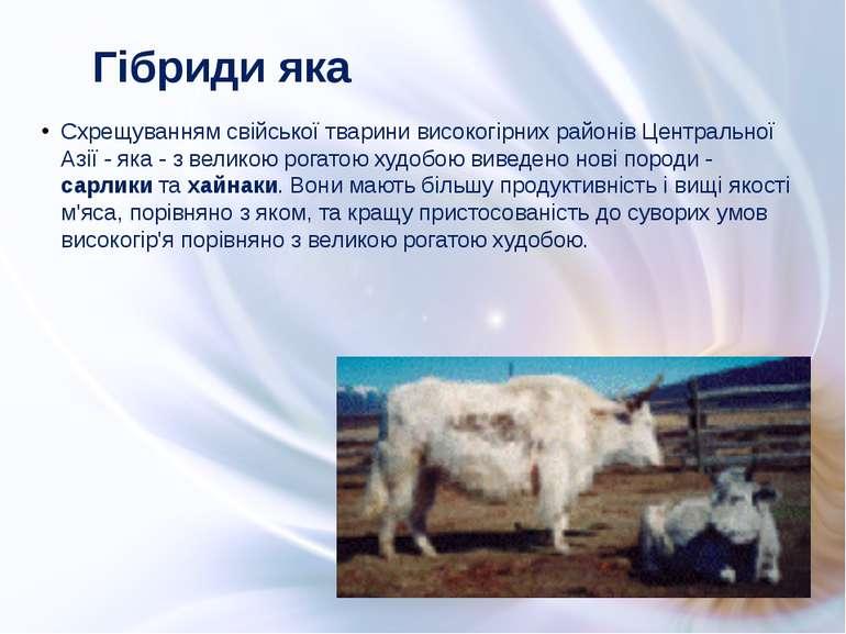 Схрещуванням свійської тварини високогірних районів Центральної Азії - яка - ...