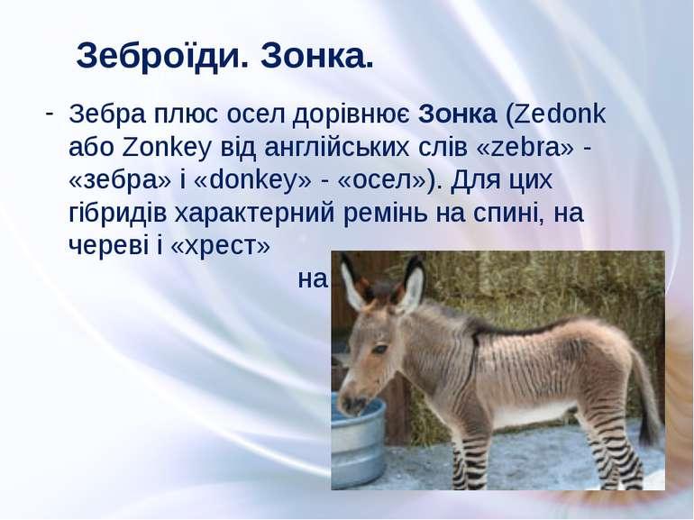 Зебра плюс осел дорівнює Зонка (Zedonk або Zonkey від англійських слів «zebra...