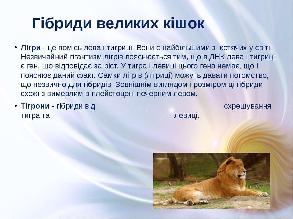 Лігри - це помісь лева і тигриці. Вони є найбільшими з котячих у світі. Незви...