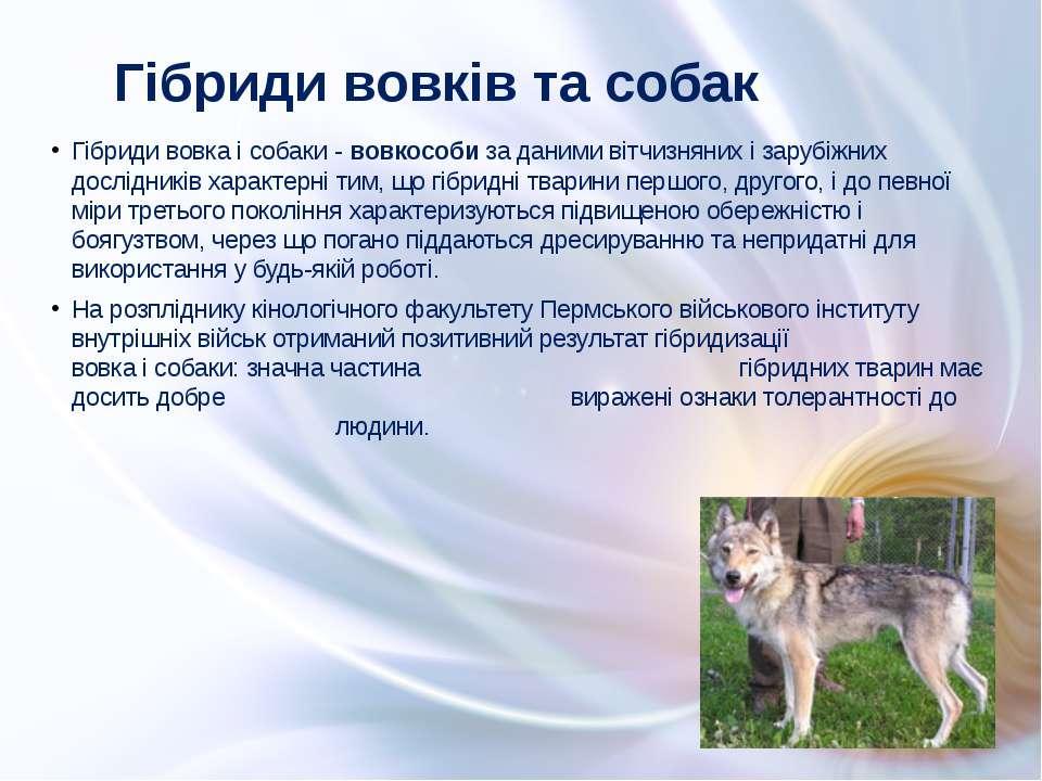Гібриди вовка і собаки - вовкособи за даними вітчизняних і зарубіжних дослідн...